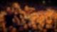 Die Toten Hosen - Happy Birthday